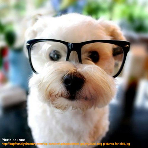dog-with-glasses.png