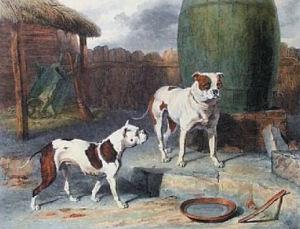 englishbulldogsarticleimage.thumb.png.80
