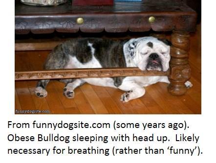 sleeping_bulldog.thumb.jpg.6cc57f5f83229