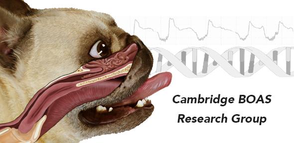 HomepageCambridge BOAS.jpg