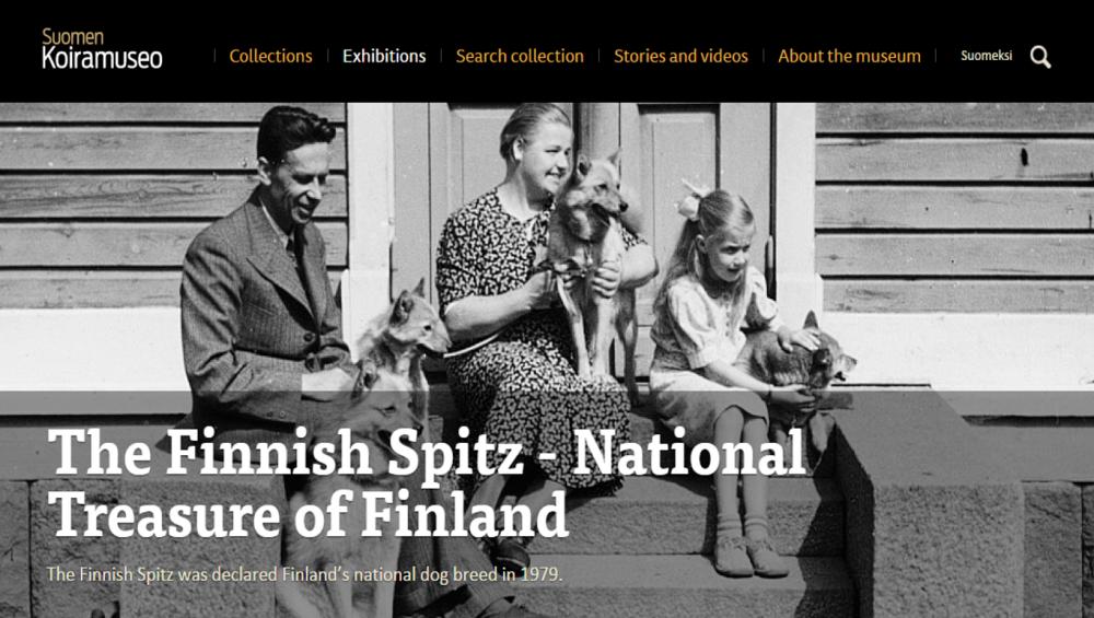 Finnish spitz in online museum2.png