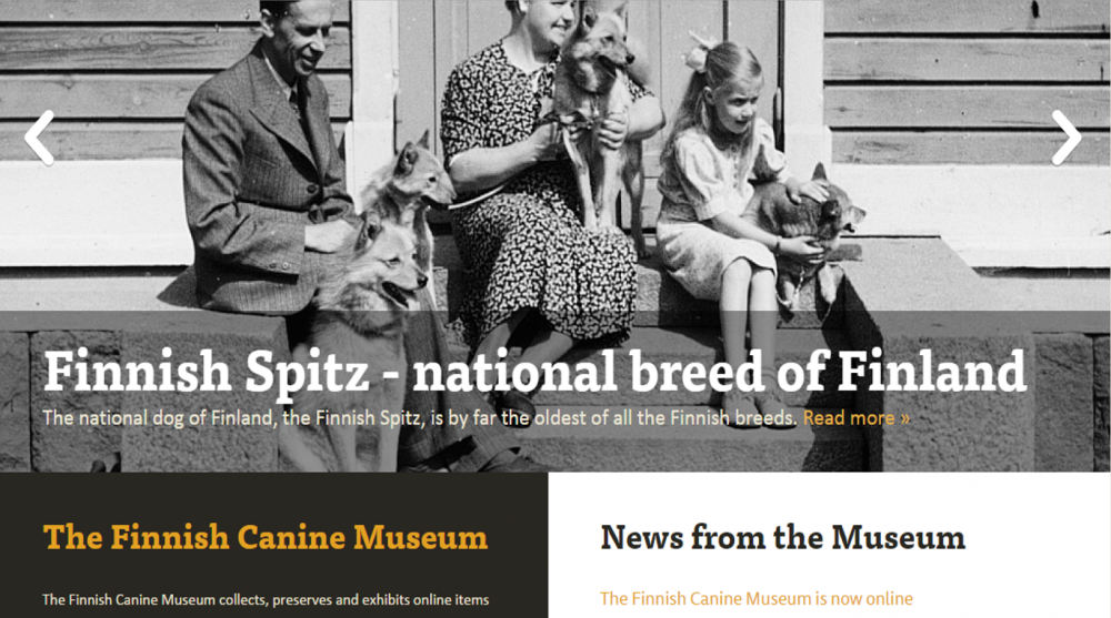 Finnish spitz national breed from museum.png