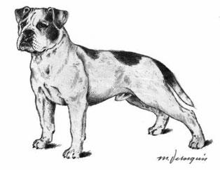 continentalbulldogvdh.jpg