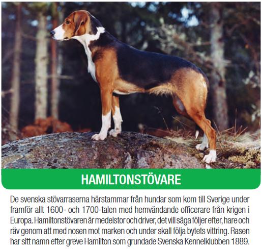 hamiltonhound.png