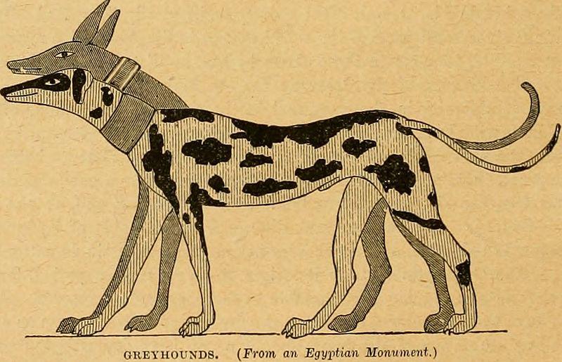 ART_1-greyhound.jpg
