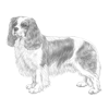 cavalier-king-charles-spaniel-100x100-fci136.png