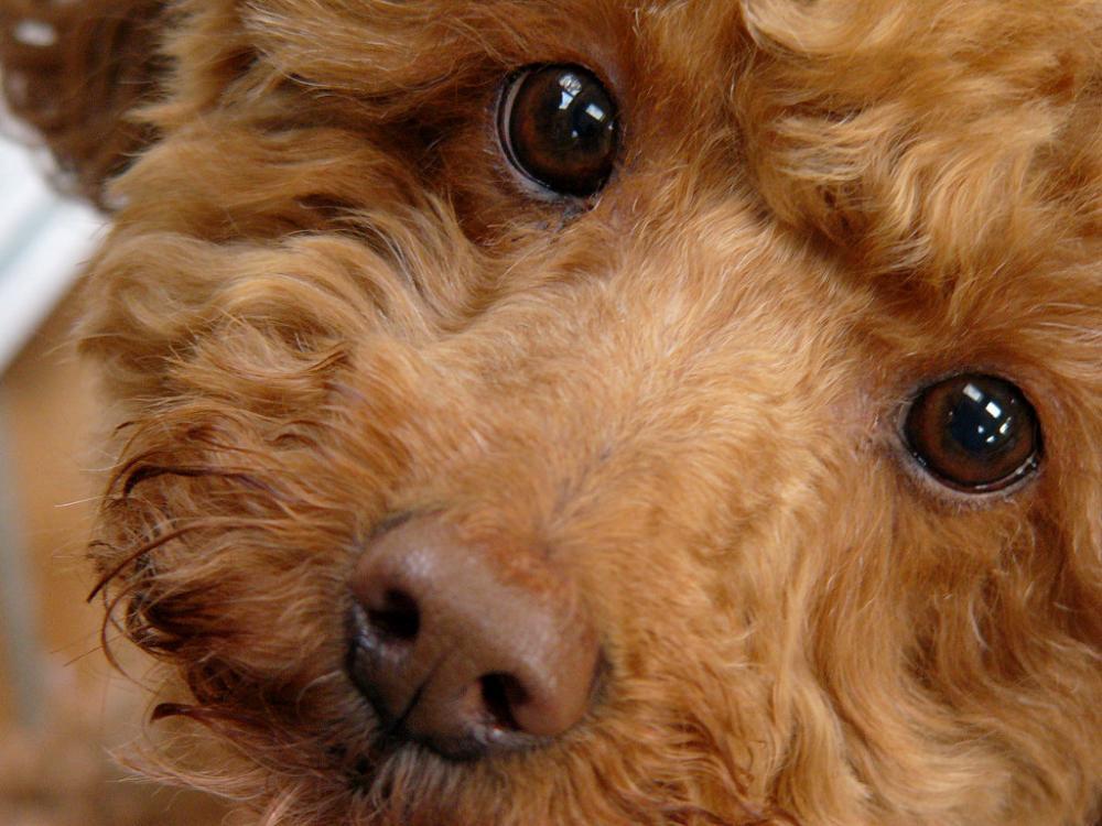 cutefaceddog.jpg