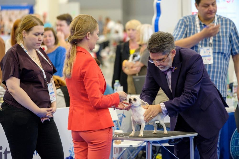 dog show vet check.jpg