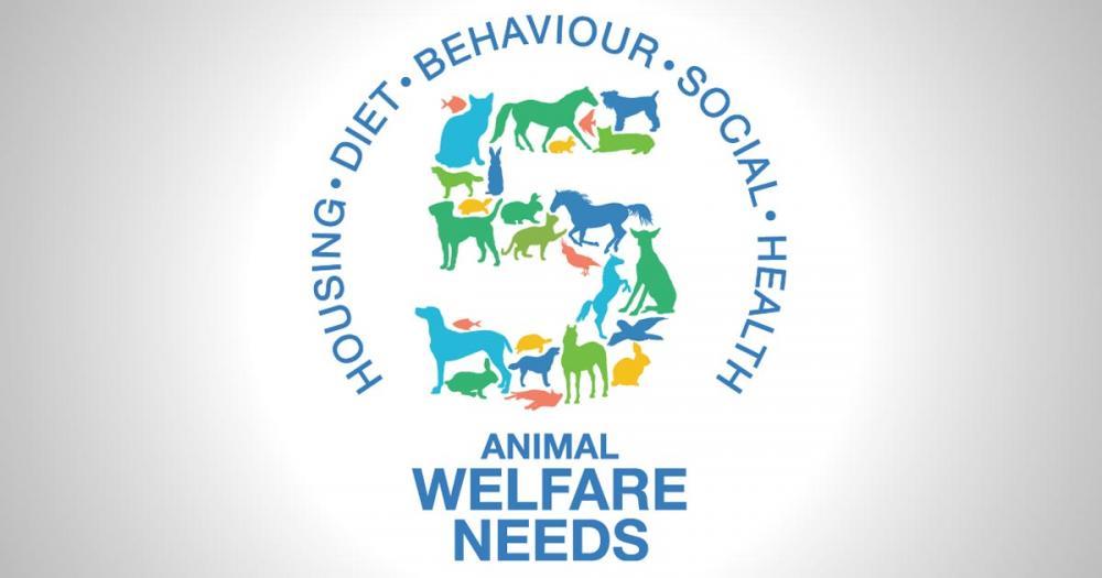 Veterinary-animal-welfare-needs.jpg