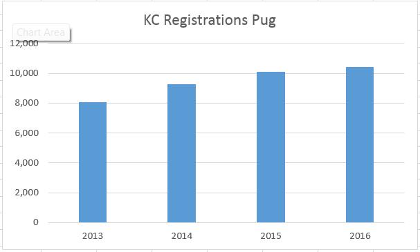 kennelclubregistrationspug13-16.png