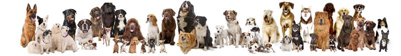 57e17e1db3901_dogsgroup.jpg