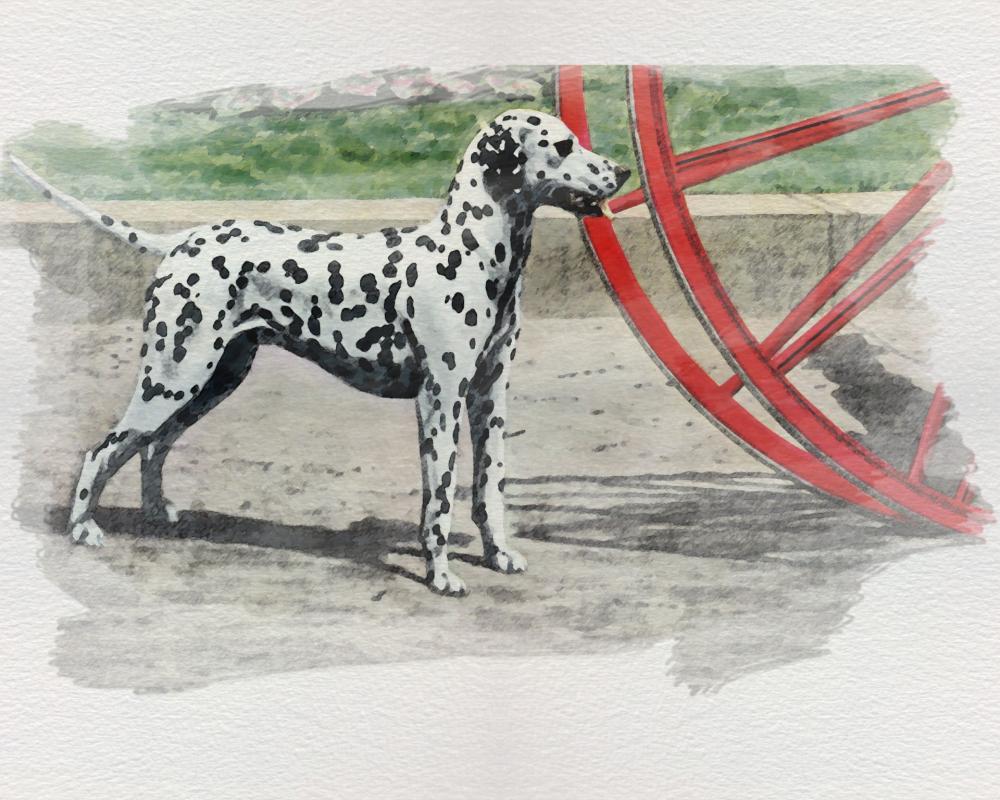 dog-dalmatian.jpg