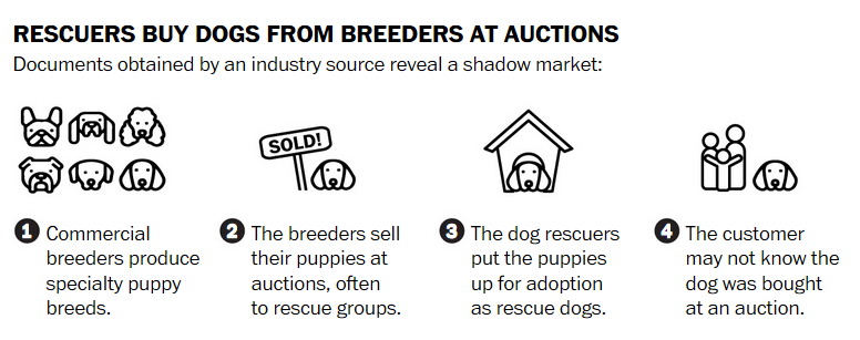 wp - rescuers at auctions.png