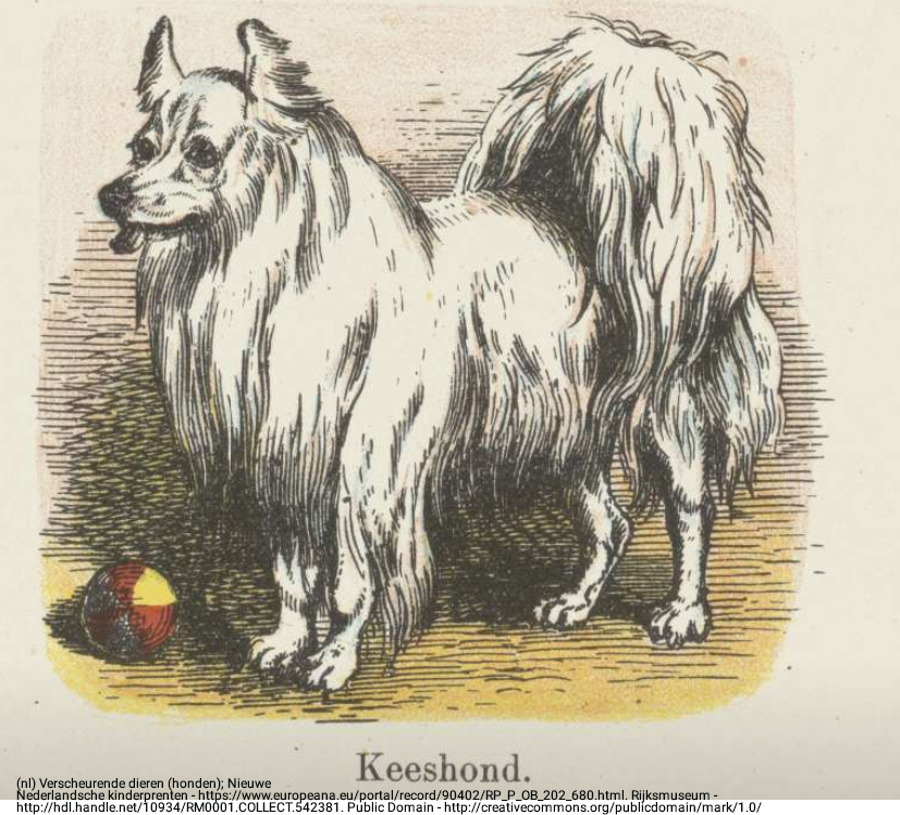 old-illustration-keeshond.png